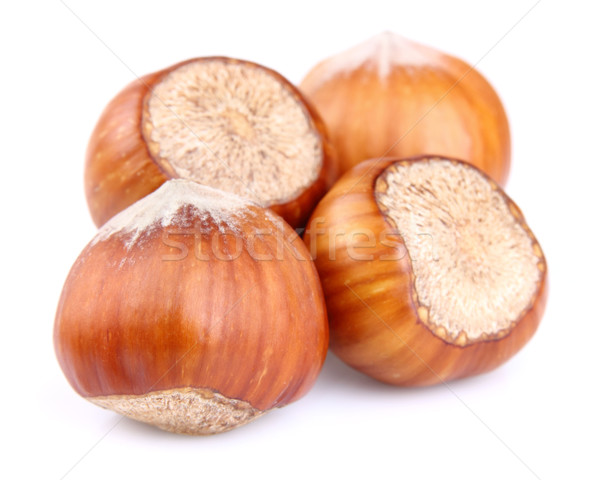 Dried hazelnuts Stock photo © Dionisvera