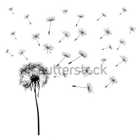 dandelions Stock photo © dip