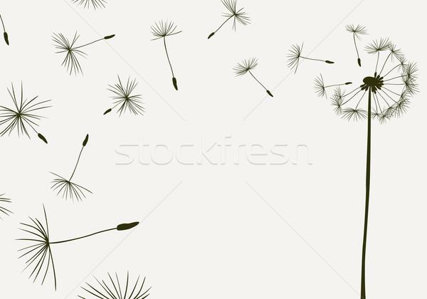 Pitypangok repülés szél természet fény háttér Stock fotó © dip
