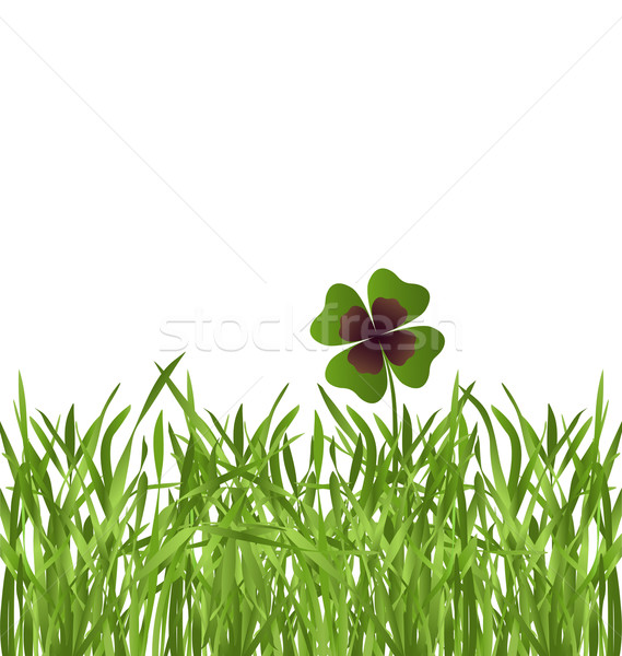 Shamrock levél fű fűmező fehér természet Stock fotó © dip