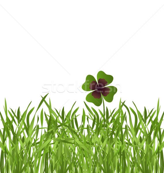 Shamrock folha grama campo de grama branco natureza Foto stock © dip