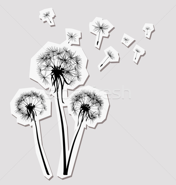 silhouettes of three dandelions in the wind Stock photo © dip