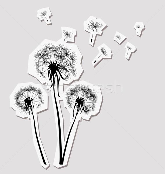 Silhuetas três leão vento flor luz Foto stock © dip