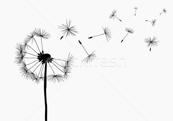 Foto stock: Leão · voador · vento · natureza · luz · fundo