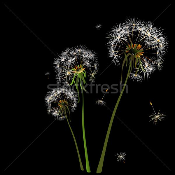 Leão dois vento luz azul flor luz Foto stock © dip
