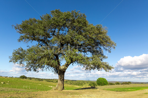 Beautiful Landscape with a Lonely Tree Stock photo © Discovod