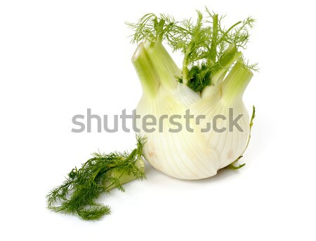 Fresh fennel Stock photo © Discovod