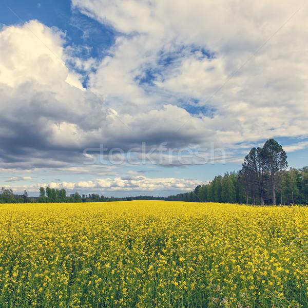 Amarelo campo floresta vintage nuvens Foto stock © Discovod