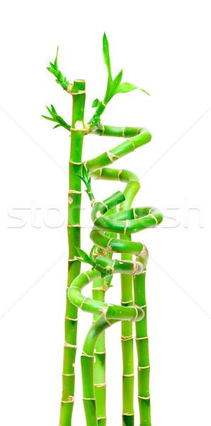 Sortudo bambu planta isolado branco verde Foto stock © Discovod