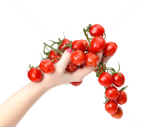 Bunch cherry tomatoes in hand Stock photo © Discovod