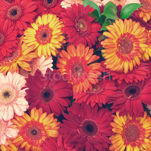 Belo flores vintage textura folha Foto stock © Discovod