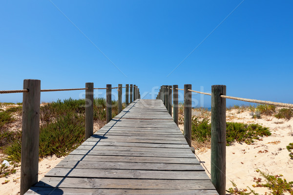 Boardwalk protecting a fragile dune ecosystem Stock photo © Discovod