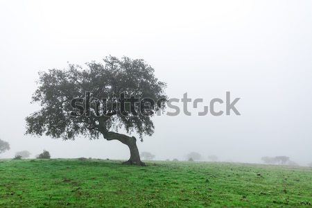 Wet Landscape With Lonely Tree in Morning Fog Stock photo © Discovod