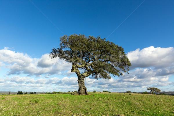 Mooie landschap eenzaam boom blauwe hemel gras Stockfoto © Discovod