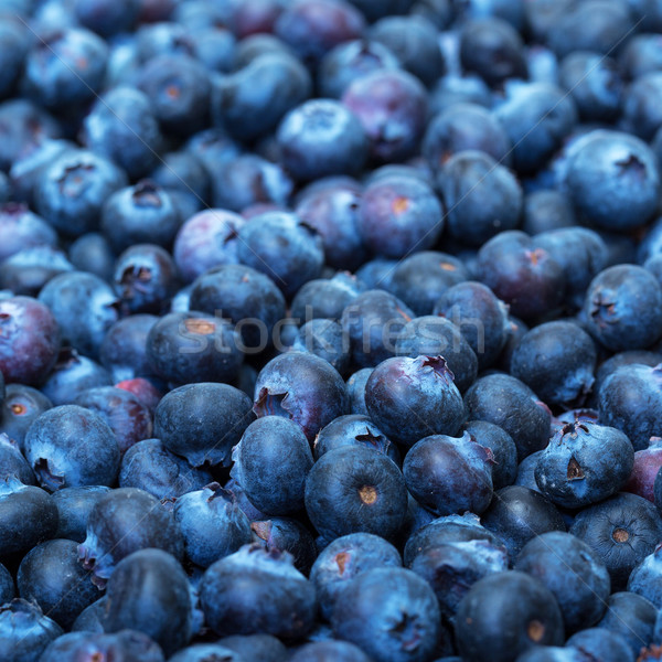 Freshly picked blueberries Stock photo © Discovod