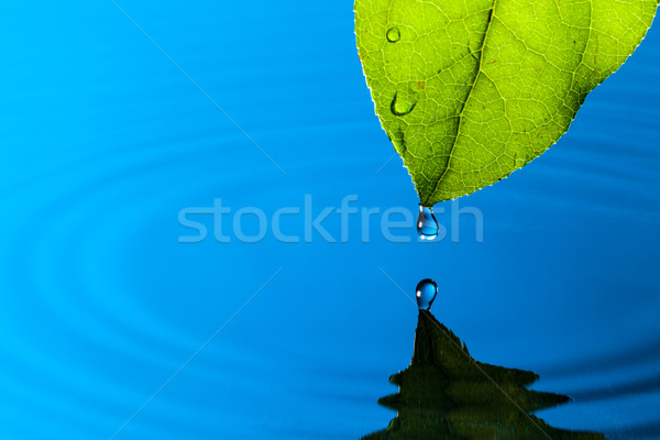 Feuille verte goutte d'eau réflexion printemps nature beauté Photo stock © Discovod