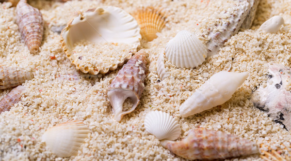 Sea shells with coral sand Stock photo © Discovod