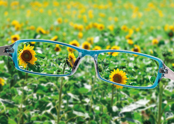 View from reading eyeglasses on beautiful nature view Stock photo © Discovod