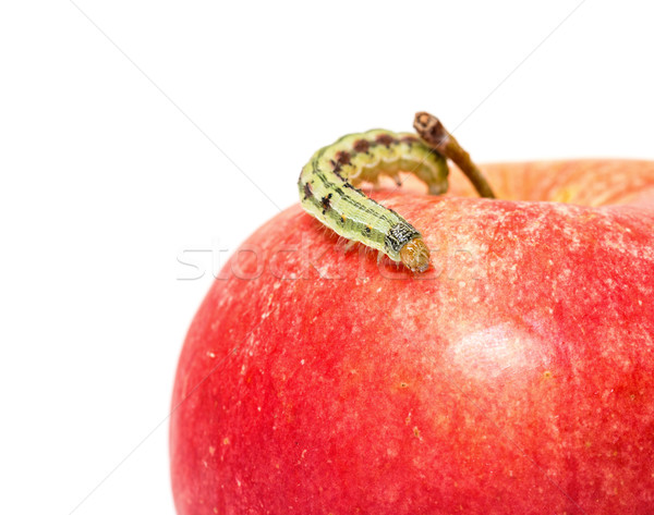 Stock photo: Green Caterpillar Creeps on Red Apple