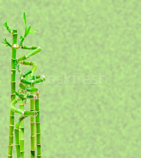 Stock fotó: Szerencsés · bambusz · növény · világoszöld · absztrakt · fa