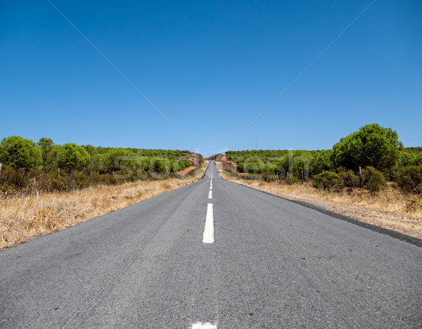 Asphalt Road on Hill Stock photo © Discovod