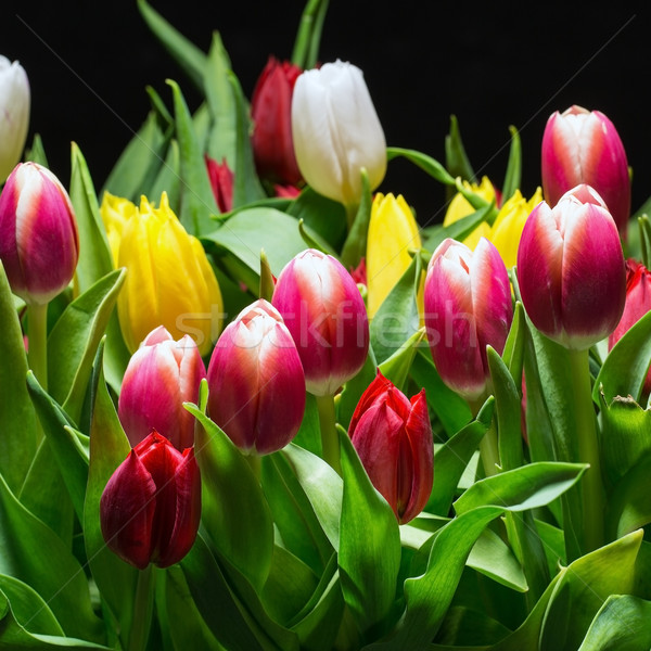 Bouquet of Bright Tulips Blooms Stock photo © Discovod