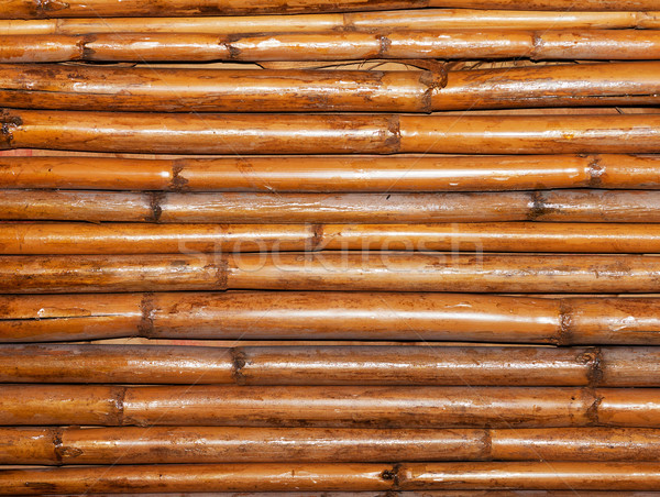 Bambou mur nature fond jungle modèle Photo stock © Discovod