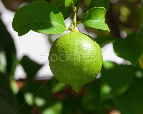 Vibrant green lemon hanging on tree Stock photo © Discovod