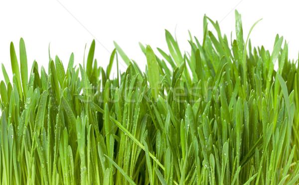 Frischen grünen Gras dew isoliert weiß Sommer Stock foto © Discovod