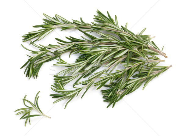 rosemary Stock photo © Discovod