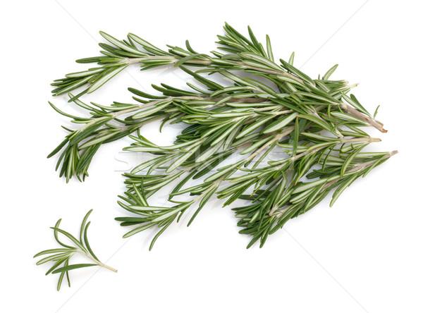 Alecrim galho branco espaço medicina planta Foto stock © Discovod