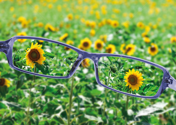 Vue lecture lunettes belle nature saine Photo stock © Discovod