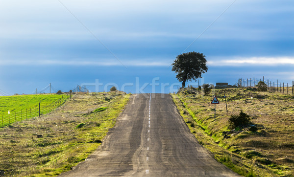 Long Country Road with Markings and Single Tree Stock photo © Discovod