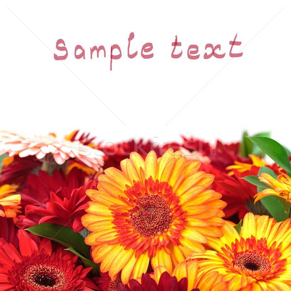 красочный Daisy цветы образец текста Сток-фото © Discovod