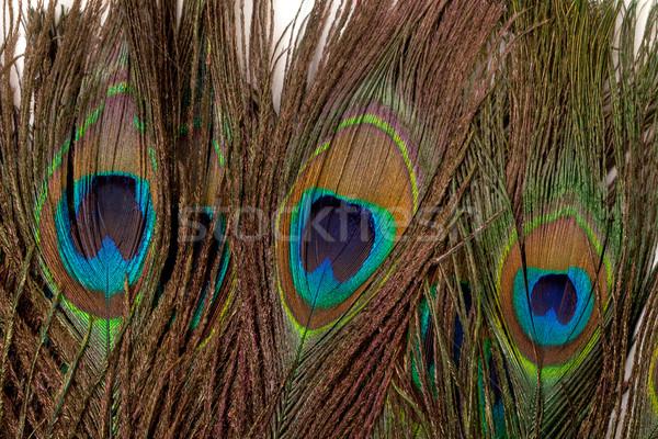 Stok fotoğraf: Renkli · tavuskuşu · tüy · kuş · yeşil · hayvan