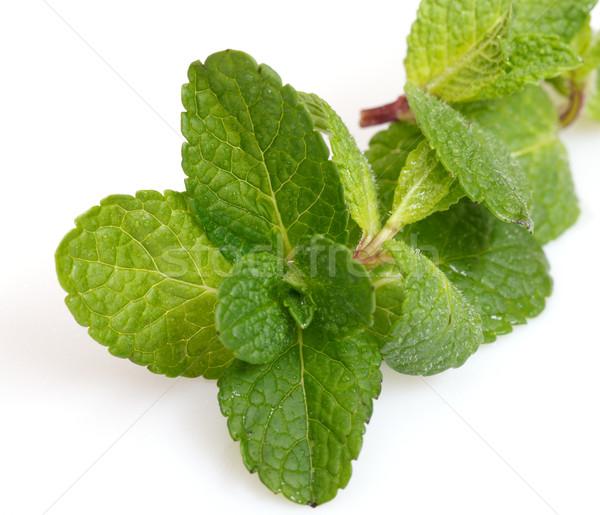 De folha branco comida verde Foto stock © Discovod
