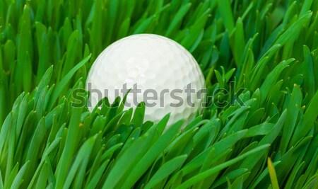 белый мяч для гольфа долго трава Сток-фото © Discovod