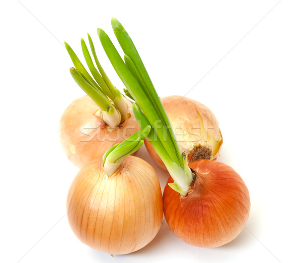 Sprouting Bulb Onions Stock photo © Discovod