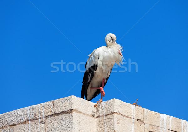 Cigogne mur ciel bleu famille nature maison Photo stock © Discovod