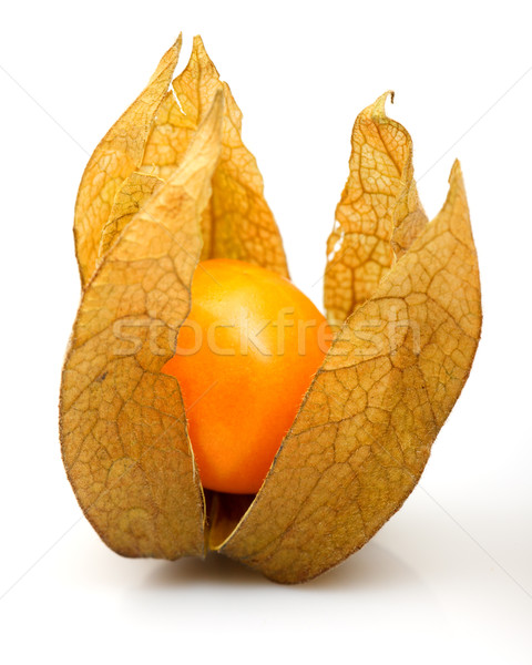 Physalis Stock photo © Discovod