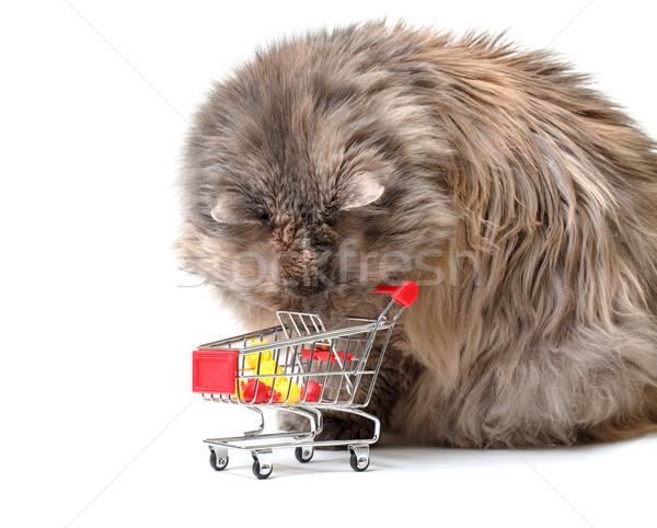 Cat carrello bianco business sfondo metal Foto d'archivio © Discovod
