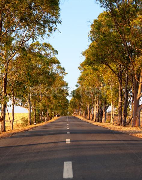 Estrada em linha reta central natureza paisagem Foto stock © Discovod