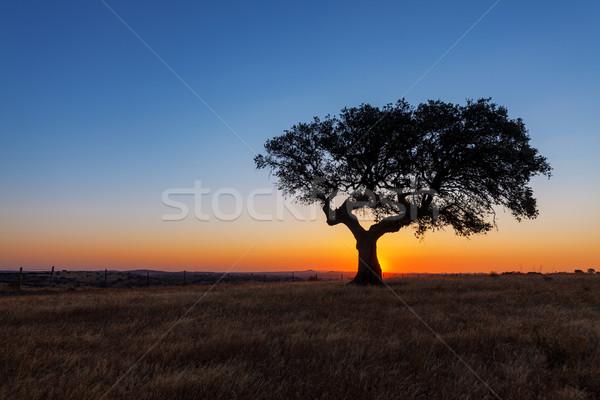 Fa búzamező naplemente gyönyörű díszlet égbolt Stock fotó © Discovod