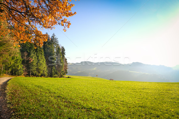 Mountain valley during sunny day in Switzerland - Natural summer Stock photo © DisobeyArt