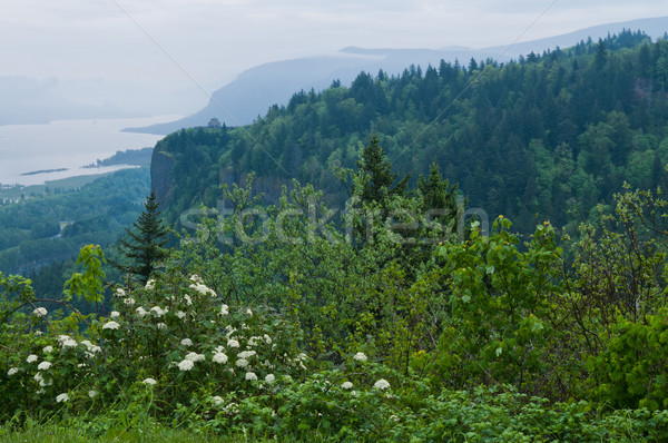 Columbia Gorge Stock photo © disorderly