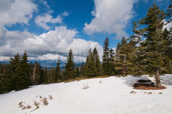 Zimą sekwoja parku lasu śniegu góry Zdjęcia stock © disorderly