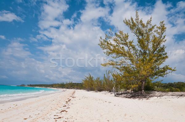 Tengerpart fehér homok Karib sziget Bahamák víz Stock fotó © disorderly