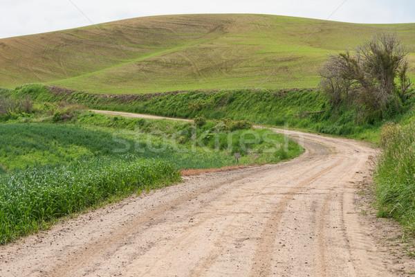 Polnej pola pszenicy drogowego dziedzinie brud Zdjęcia stock © disorderly