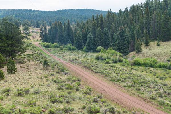 Estrada de terra pinho floresta la árvores caminho Foto stock © disorderly