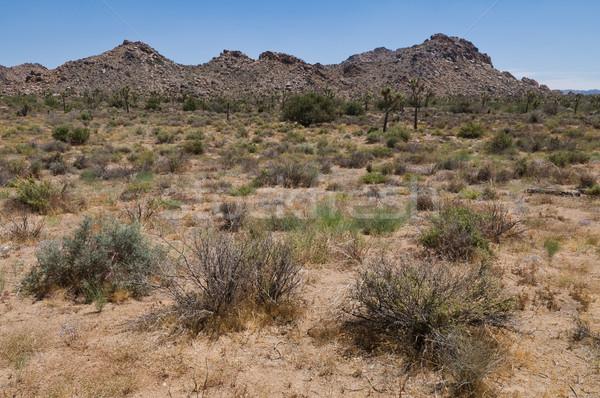 Fa park Kalifornia sivatag fák növények Stock fotó © disorderly